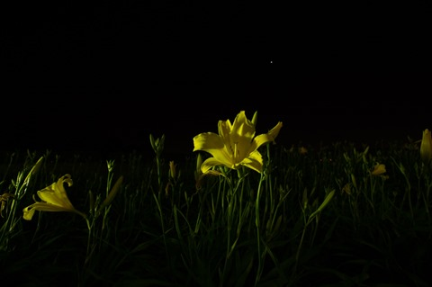 Flores na Noite