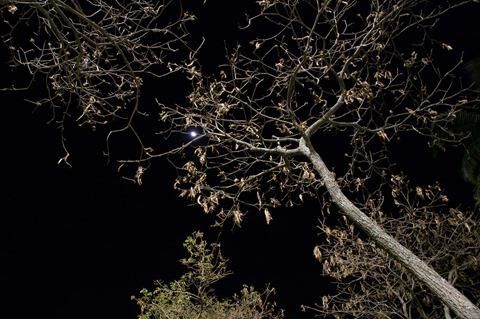 Árvores na Noite I