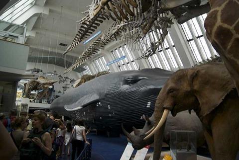 2010-07-05 - Natural History Museum (73) - Reduzida