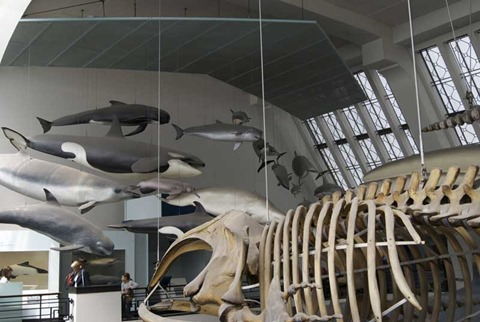 2010-07-05 - Natural History Museum (79) - Reduzida