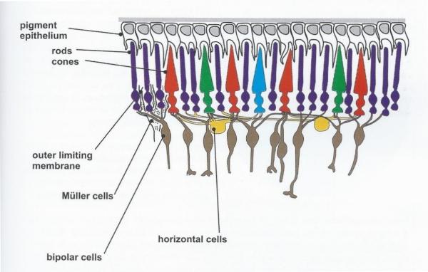 Alex Villegas - O Controle da Cor - Retina - P89