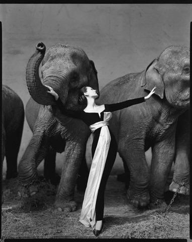 Richard Avedon - Dovima with elephants, evening dress by Dior - Paris - 1955